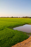Paddy land Royalty Free Stock Photos