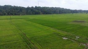 Paddy land in Sri Lanka royalty free stock photo