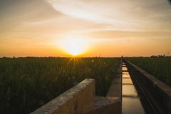 Water supply canal for paddy field. Paddy in Malaysia needed high amount of water to grow..water canals are build in vein to ensure enough water is supplied royalty free stock image