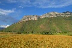Paddy Mosuo red rice field and Gemu holy mountain. Yunnan, China Stock Photos