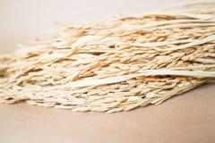 Paddy- oder Reiskorn (Oryza) auf braunem Hintergrund Stockfotos
