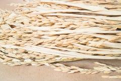 Paddy- oder Reiskorn (Oryza) auf braunem Hintergrund Lizenzfreies Stockbild