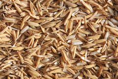 Paddy rice Royalty Free Stock Images