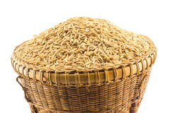 Paddy rice in basket. On white background Stock Images