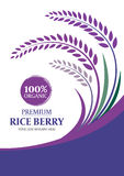 Paddy rice berry for background - Layout template size A4 Vector design Royalty Free Stock Image