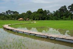 Paddy Rice fält med bambubron royaltyfri fotografi