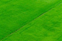 Paddy rice field background texture Royalty Free Stock Images
