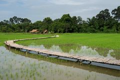 Paddy Rice field with bamboo bridge. Walking trail and hut in the morning at rural during rainy season, Nakhon Nayok Province, Thailand Royalty Free Stock Photography