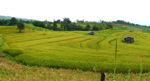 Paddy rice field panorama@Mae Cham,Chiangmai Royalty Free Stock Image