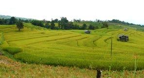 Paddy rice field panorama@Mae Cham,Chiangmai Royalty Free Stock Image