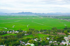 Paddy rice field in southern Vietnam Stock Image