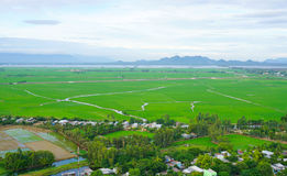 Paddy rice field in southern Vietnam Stock Photos