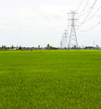 Paddy Rice Fields. Royalty Free Stock Photo