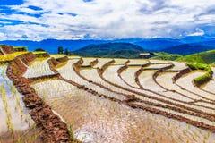 Paddy - rice fields at pa pong peang  chiang mai asia Thailand Royalty Free Stock Image
