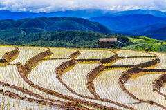 Paddy - rice fields at pa pong peang  chiang mai asia Thailand Royalty Free Stock Images