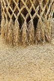 Paddy or rice grain Stock Photography