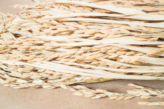 Paddy or rice grain (oryza) on brown background Royalty Free Stock Image