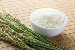 Paddy and rice grain Royalty Free Stock Photography