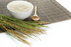 Paddy and rice grain Royalty Free Stock Images