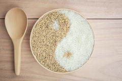 Paddy and rice in the plante Royalty Free Stock Photo