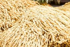 Paddy rice seed Stock Photo