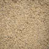 Paddy rice seed background Royalty Free Stock Photos