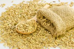 Paddy rice seed. Royalty Free Stock Images