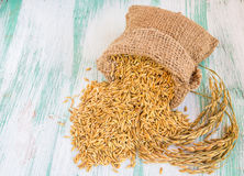 Paddy rice seed in a Burlap sack. Royalty Free Stock Photo