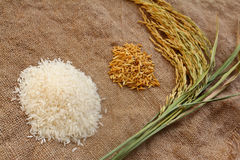 Paddy and rice Series 1 Stock Image