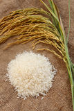 Paddy and rice Series 2 Stock Photography