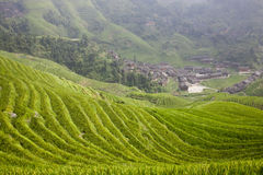 Paddy rice terraces Stock Photos