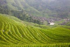 Paddy rice terraces Stock Photos