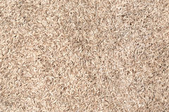 Paddy rice texture Royalty Free Stock Image