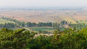 Paddy rice treetops Royalty Free Stock Photo