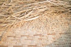 Paddy rice on weave threshing basket Royalty Free Stock Images