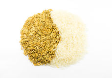 Paddy and rice  Royalty Free Stock Photo