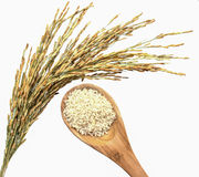 Paddy rice and wood spoon Royalty Free Stock Photo