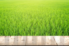 Paddy rice and wood table Stock Photos