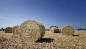 Paddy roll Royalty Free Stock Photography