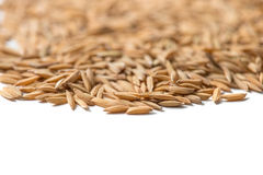 Paddy seed Stock Photography