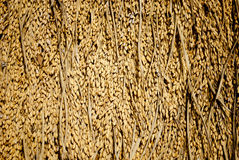Paddy seeds background Stock Images