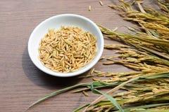 Paddy Seeds orgánico, arroz blanco en el fondo de madera foto de archivo libre de regalías