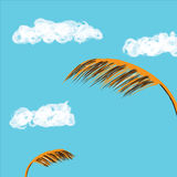 Paddy and Sky. Illustration of paddy leave and sky Stock Photo