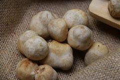 Paddy Straw Mushrooms Stockbild