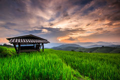 Paddy in the sunset Royalty Free Stock Image