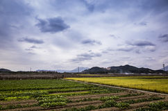 paddy terrace farm under sky Stock Image