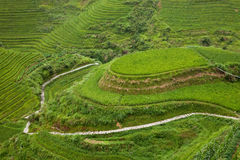 Paddy terraces Royalty Free Stock Photo