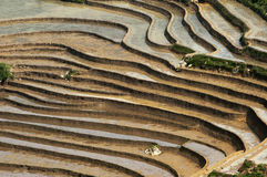 Paddy terraces in Sapa, Vietnam. Stock Photos