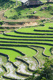 Paddy terraces in Sapa, Vietnam. Stock Images