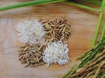 Paddy und Reis auf hölzerner Tabelle Lizenzfreie Stockbilder